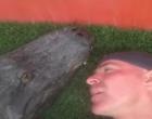 Homem fica frente a frente e dá beijo em jacaré, que reage; vídeo