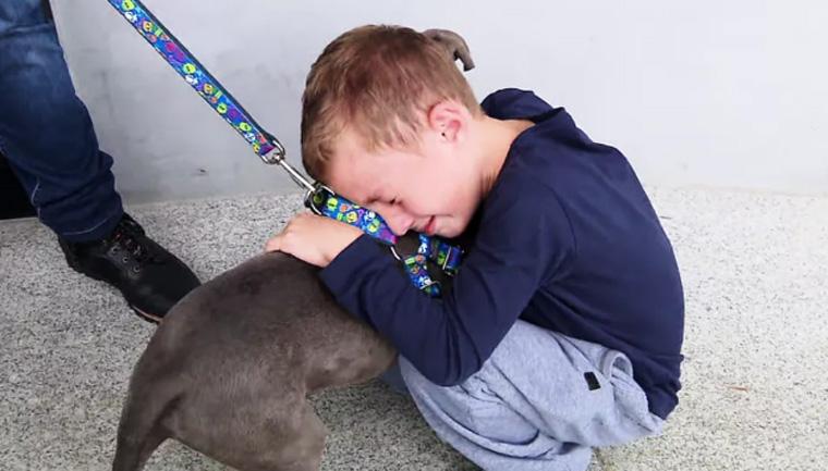 Menino chora ao reencontrar cão que foi roubado durante assalto - Imagem 1