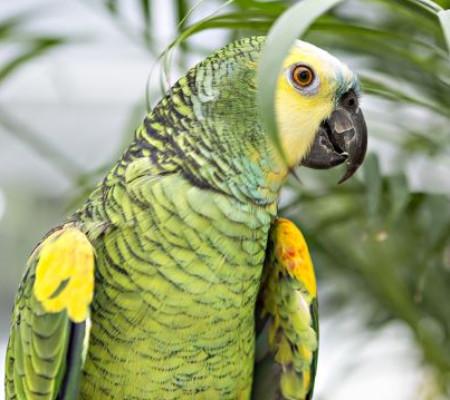 Conheça cinco espécies mais famosas de pássaros brasileiros