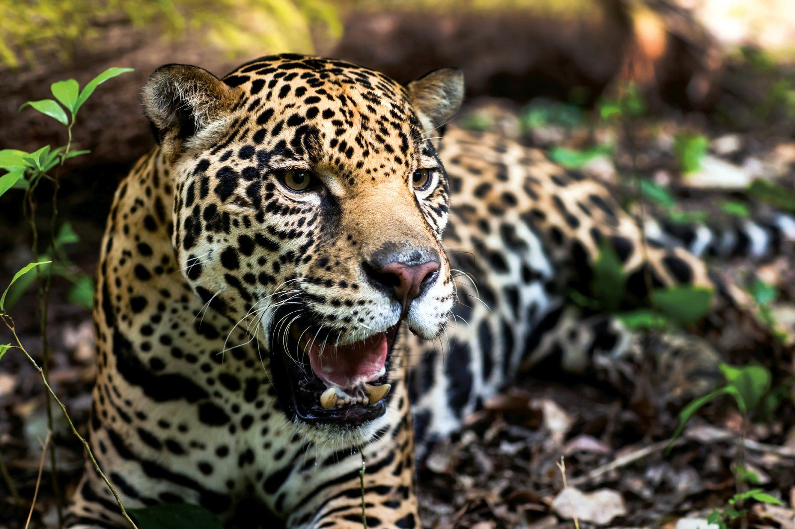 WWF / AFP