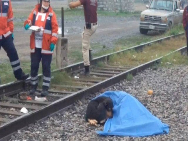 """Cão """"vela"""" o corpo do dono, morto em linha de trem"""