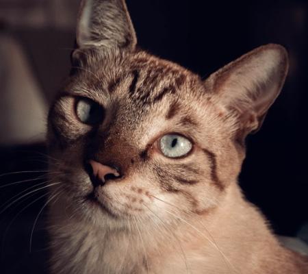 Conheça mais sobre Fotografia Pet, a nova moda do mercado animal