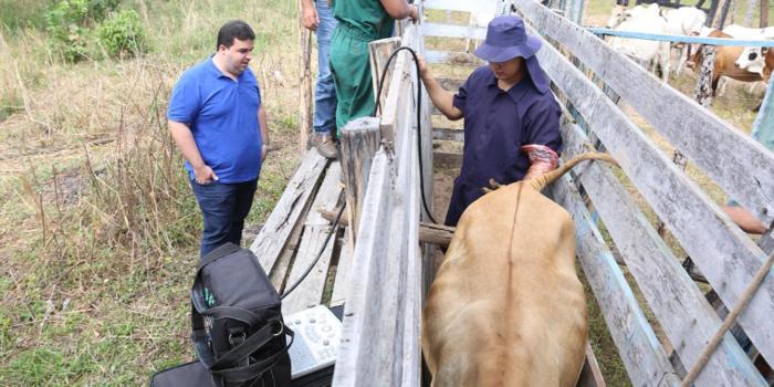 """Programa """" Fazenda Produtiva"""" vai gerar lucro na zona Rural de Palmeirais"""