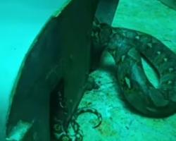 Serpente gigante fica presa em batedeira industrial e é salva por equipe