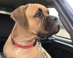 Cadela abandonada percorre 200 quilômetros à procura dos donos