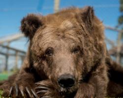 Conheça toda a trajetória da Rowena, a nossa eterna Ursa Marsha