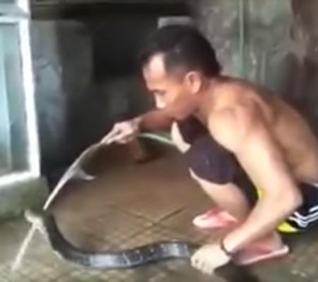 Vídeo: Cobra gigante ganha berço, banho de espuma e limpeza dental antes de dormir