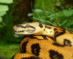 Vídeo: Cobra gigante surge em meio à multidão e causa pânico