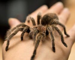 Conheça as 11 aranhas mais perigosas do planeta
