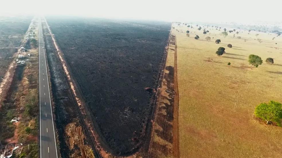 Drone captou 'mar cinza' de vegetação queimada próxima a rodovia em MS — Foto: Luiz Felipe Mendes/Arquivo Pessoal