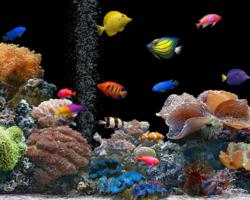 Conheça 5 espécies de peixes ornamentais fáceis de criar e que podem conviver juntos