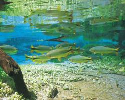 Bonito: um dos lugares mais visitados do Brasil