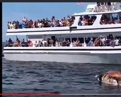 Vídeo chocante mostra tubarão devorando baleia na frente de turistas