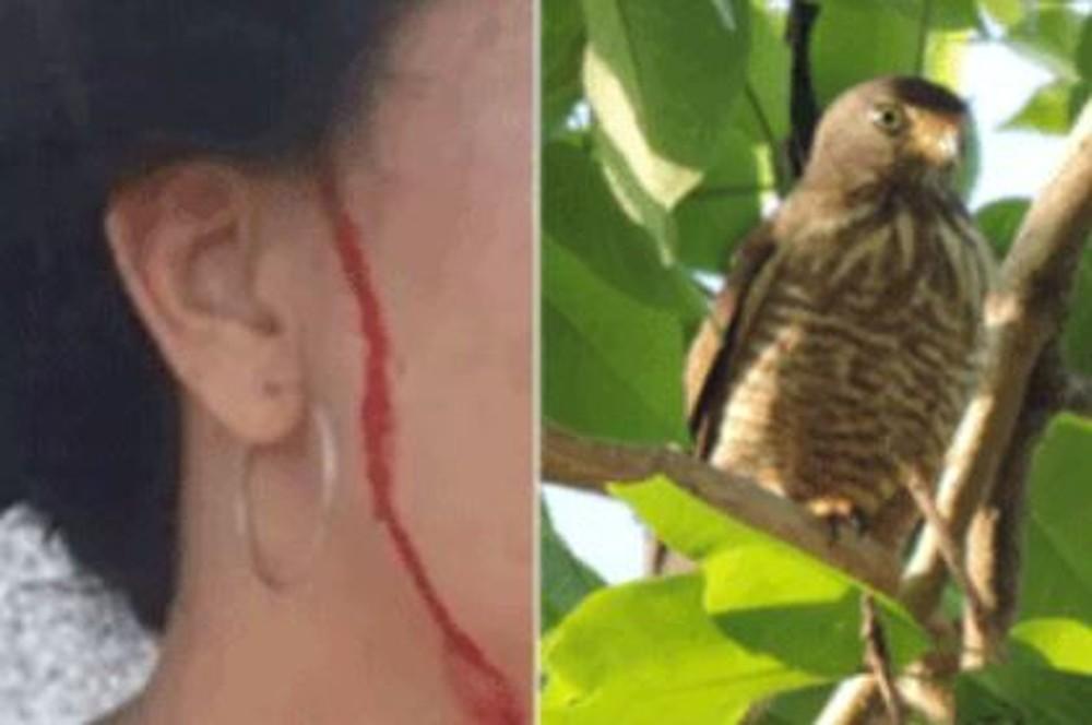 """Filhotes de gavião que """"perseguia"""" moradora são levados ao zoológico - Imagem 3"""
