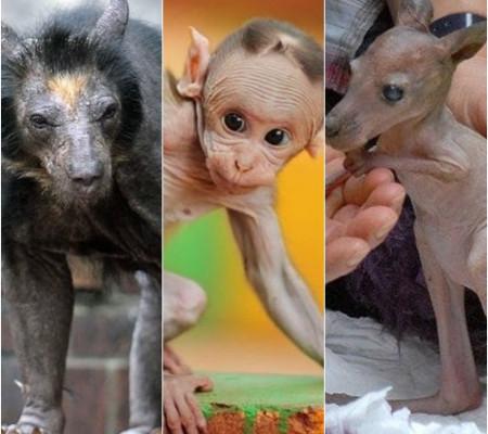 Confira o quão estranhos ficam alguns animais pelados
