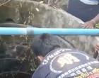 Cobra 4 metros é resgatada do fundo de poço na Tailândia; assista