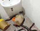 Mulher briga com cobra até a morte enquanto usava o banheiro