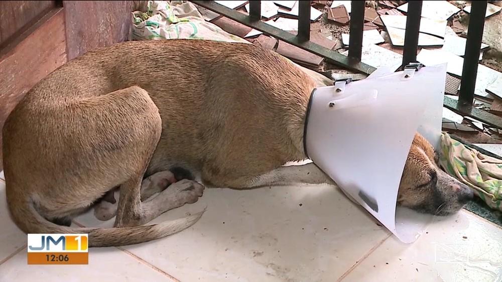 Comissão da OAB cobra que PM que atirou em cadela receba punição no MA - Imagem 2