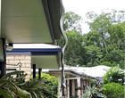 Enorme píton devora lagarto pendurada do telhado de uma casa