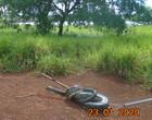 Sucuri de 7 metros é capturada em hidrelétrica do Mato Grosso do sul