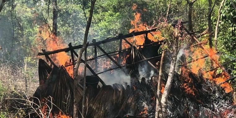 PM do Maranhão queima mais de 7 mil pés de maconha perto de Tutóia