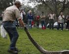 Caçadores matam 80 cobras pítons na Flórida