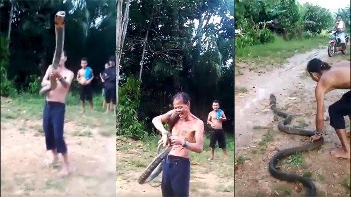 Vídeo mostra cobra-rei matando homem na Indonésia - Imagem 2