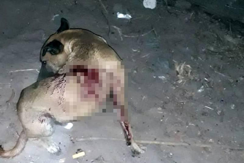 Cachorro ficou bastante ferido (Reprodução/ Tribuna em Foco)