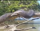"""Flagrante de """"anaconda brasileira"""" viraliza internacionalmente; vídeo"""