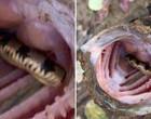 Cadeia alimentar: pescador fisga peixe com cobra viva dentro da boca