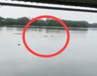 Chocante! Crocodilo devora homem que nadava em lagoa; assista o ataque