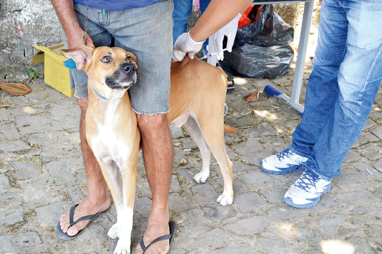 Vacinação de cães e gatos ocorrerá nas zonas rurais de Teresina neste sábado (Meio Norte)