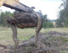 Produtor rural encontra sucuri enorme ao fazer escavação em açude