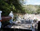 Covid-19: Brasil registra 432 mortes e quase 30 mil casos em 24 horas