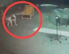 Crocodilo invade residência na Tailândia e quase ataca cachorro; vídeo