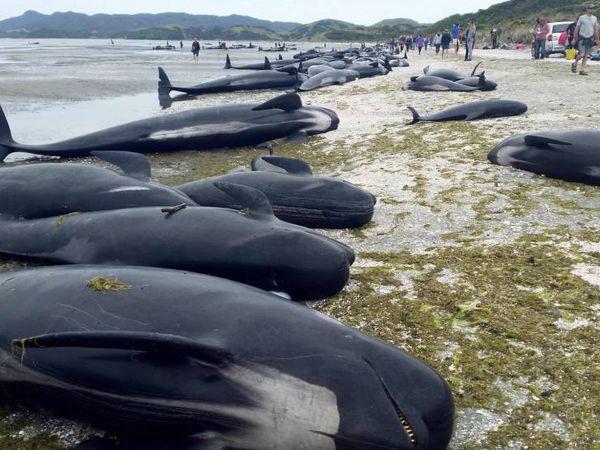 A maioria dos animais ficou presa nas praias do arquipélago