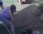 Cachorro é salvo da morte por dona após ser atacado por cobra; vídeo