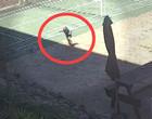 Desespero! Criança é picada após pisar em serpente venenosa; vídeo