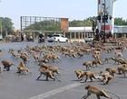 2020 o ano em que os animais invadiram as cidades; veja cenas