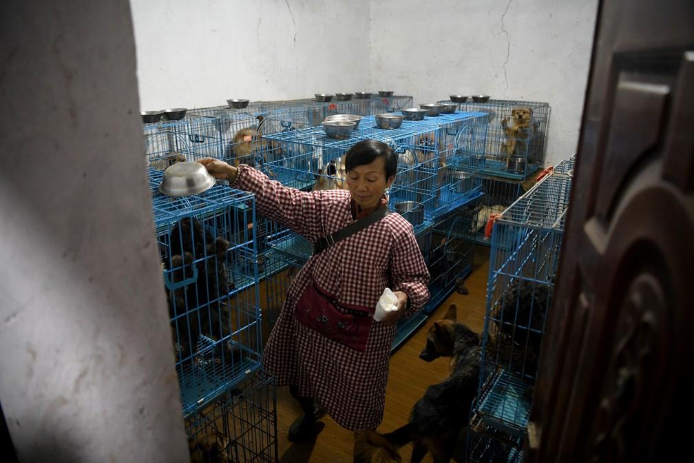 Wen Junhong transformou sua casa em um abrigo para mais de 1,3 mil cães
