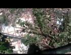 Jiboia de 1,5 metro é resgatada de piscina abandonada no DF; Vídeo