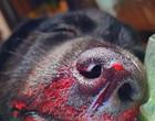 Filhote de cachorro de 11 semanas é salvo de ataque de píton