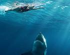 Tubarão quase ataca de surpresa surfista nas águas dos EUA (vídeo)