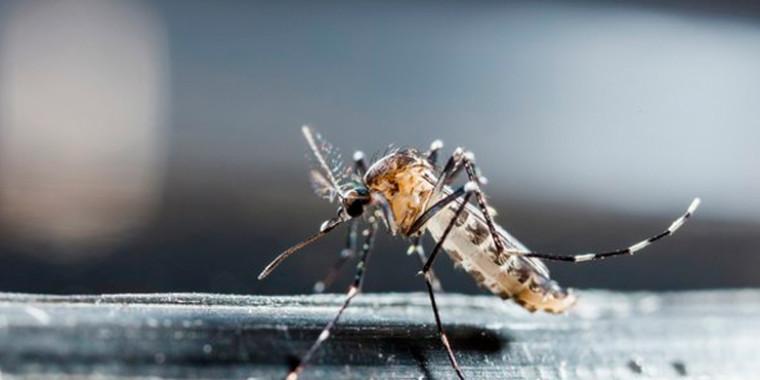 Piauí está entre os estados que podem ter surto de dengue em 2020