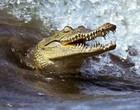 Drone chega assustadoramente perto de crocodilo