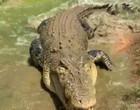 Homem registra momento impressionante em que crocodilo é alimentado