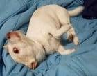 Ilusão de ótica? Foto de cachorro circula na web e confunde usuários