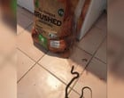 Mulher fica chocada após encontrar cobra em saco de batatas