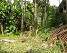 Vídeo mostra duas cobras em ritual de batalha impressionante; Assista