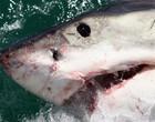 Conheça os ataques mais impressionantes de tubarões a humanos; vídeos